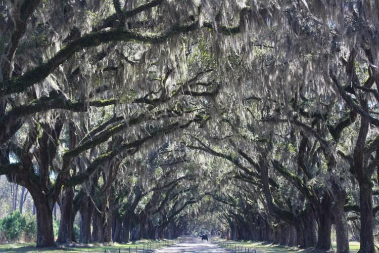 Wormsloe Historic Site, Savannah, GA