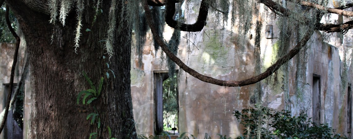 Ruins of Retreat Hospital and tree, Sea Island, GA