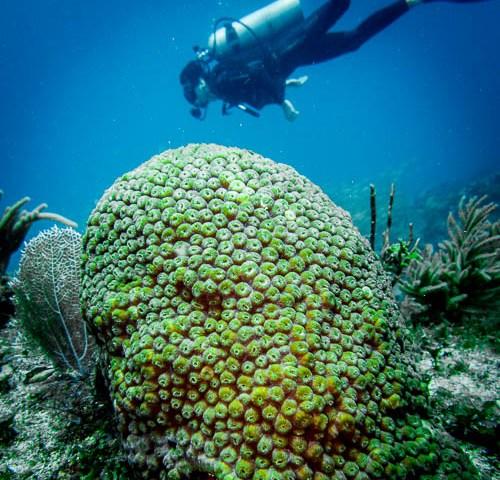 Diver and Sponge