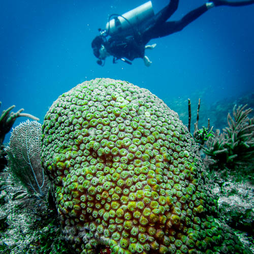Diver and Sponge