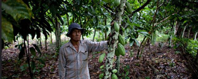 Bolivia: Cacao que cambia vidas | Oxfam International