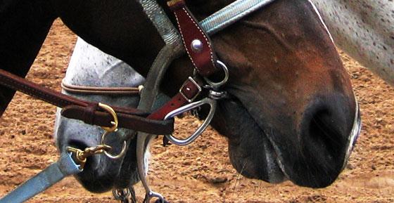 Da boca do cavalo