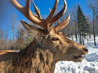 Muitos dos animais são vistos em close up e há até quem se atreva a fazer um cafuné.