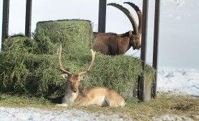 Os animais convivem em paz e estão por toda parte.