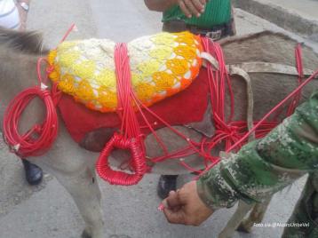 burro bomba
