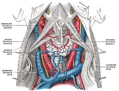 Gray's Anatomy arteries and veins