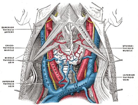 Gray's Anatomy arteries and veins