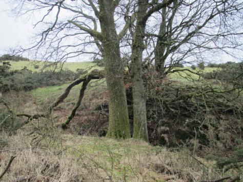 Trees mark the gorse-free access