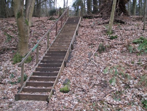 Steps connect the cutting path with the woodland path