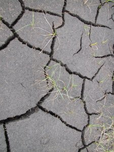 Cracked peat