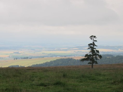 View from Kincaldrum Hill
