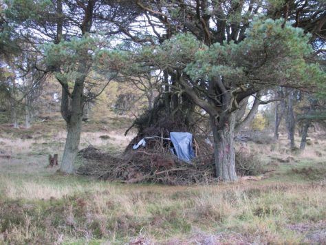 Shelter in woods behind Scotston Hill