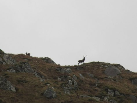Red deer on Creag na Cathaig