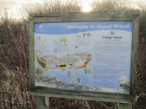Welcome to Naiad Wood