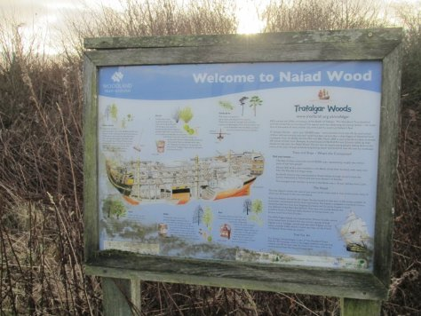 Welcome to Naiad Wood