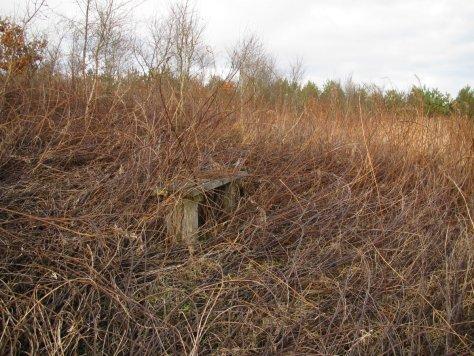Bench in Naiad Wood