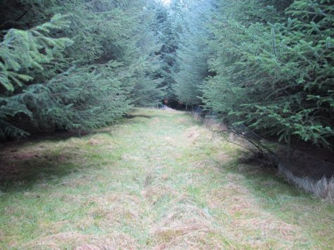 Forest track to Redmyre Loch