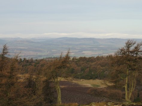 Grampians and Strathmore from Auchterhouse Hill