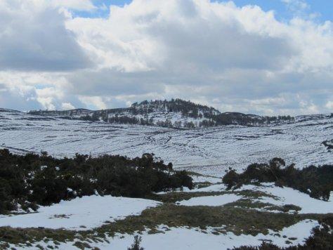 Auchterhouse Hill from the head of Glen Ogilvie