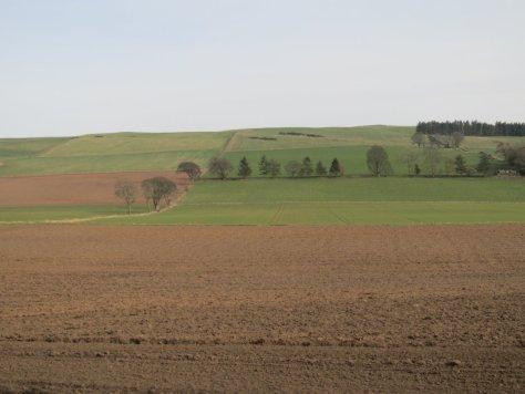 Balkeerie Hill from Balkeerie
