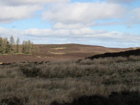 Keillor Hill from the back of Lundie Craigs