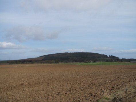 Fothringham Hill from the west