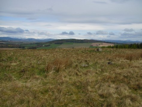 Fothringham Hill from Labothie Hill