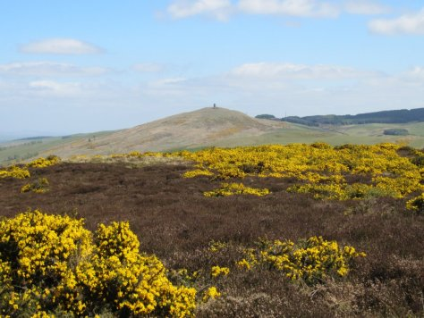 Kinpurney Hill from Newtyle Hill