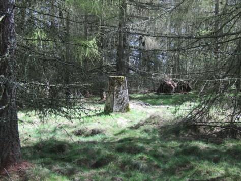 Trig Point in Balthayock Wood