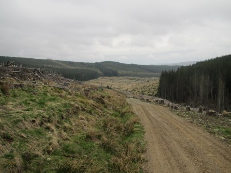 Track through Glenclova Forest, Glen Prosen