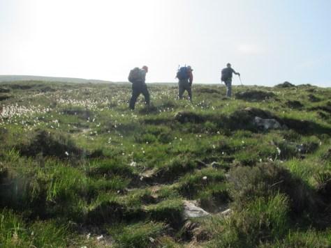 Walking through cotton grass, Moruisg