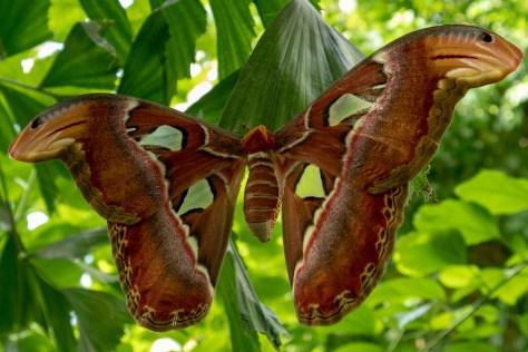 Butterfly in Schmetterling Haus, Vienna