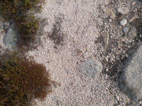 Sandy path on Sandy Hillock, Glen Clova