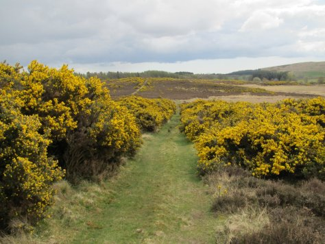 Track descending off Newtyle Hill
