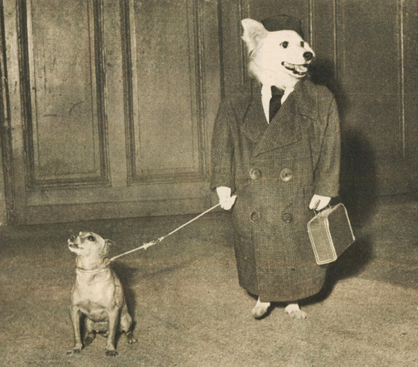 You know things are desperate when you resort to photos of dogs in business suits.