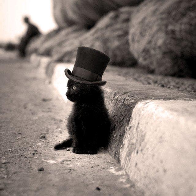 The Obligatory Cute Cat Picture.