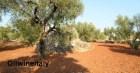 Puglia-Terra-Trullo