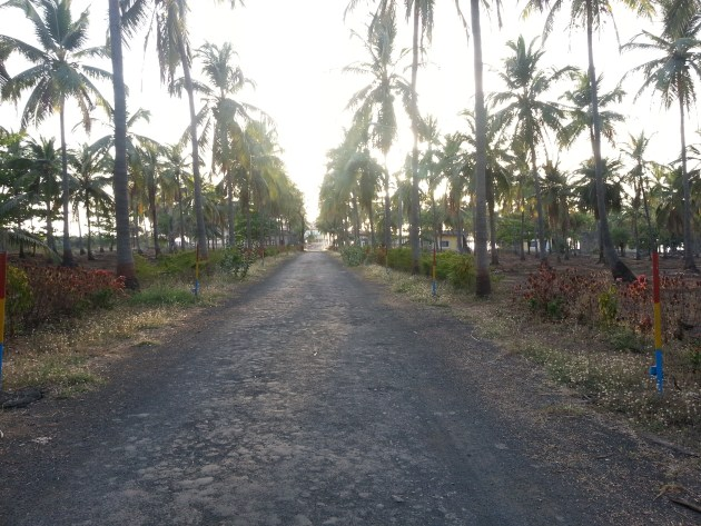 Palm trees line a secluded road in this little union territory