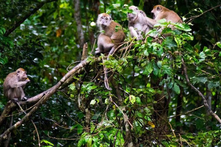 Sabah, Borneo, Malaysia (Courtesy: Karen Alexis)