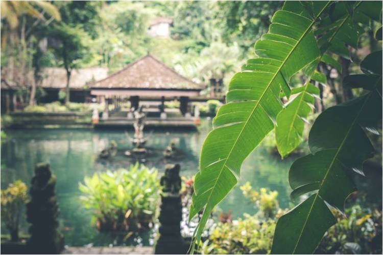 An oasis of green (Courtesy: Artem Bali)