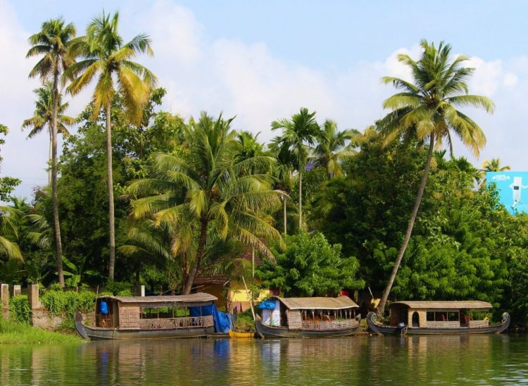 Houseboats docked by the palm groves in Kerala's backwaters