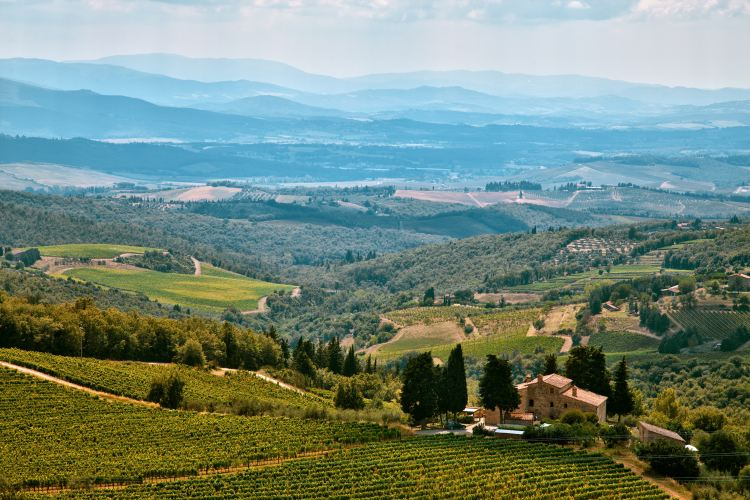 A vineyard estate in Chianti (Courtesy: Rowan Heuvel)