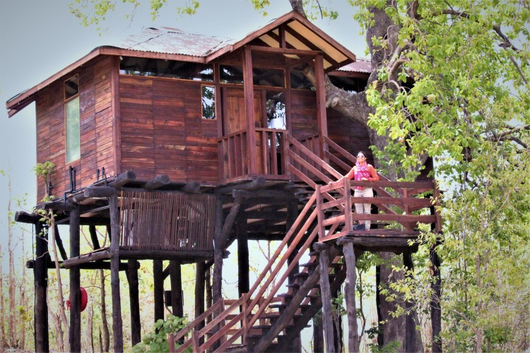 My treehouse at Pench Tree Lodge, Madhya Pradesh