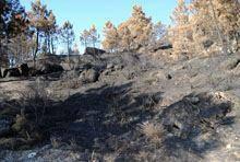 As cinzas depois das chamas