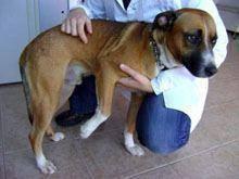 Cão com chip apareceu no Bonfim
