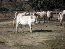«Medidas de apoio à agricultura pouco vêm         resolver»