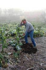Guardenses recorrem à agricultura pela saúde         da economia familiar