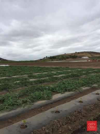 30-acres of leased farm land to grow fruits and vegetables.