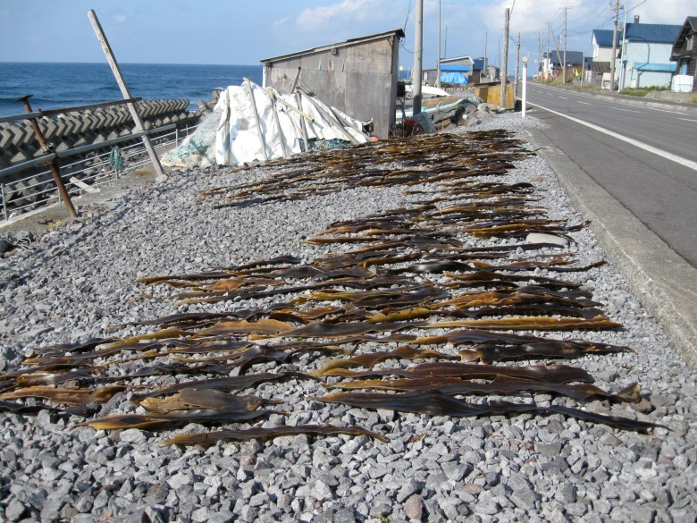 Photo Description: on a beach side are with rocky and uniform surface lies a number of strips of konbu (seaweed).