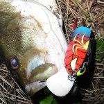 雄蛇ヶ池7/18マグナム缶バドで49cm